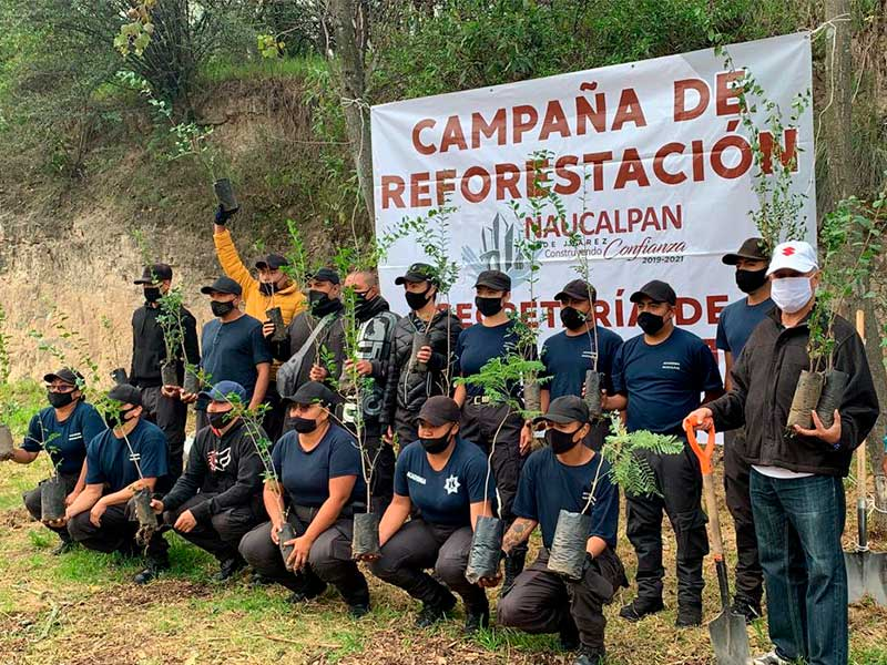 reforestacion-13