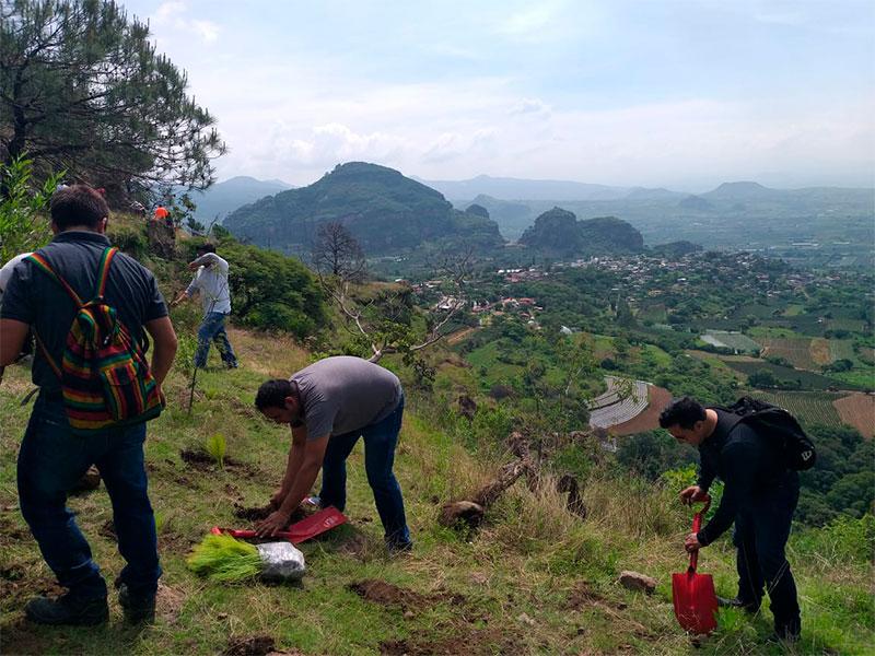 reforestacion-4