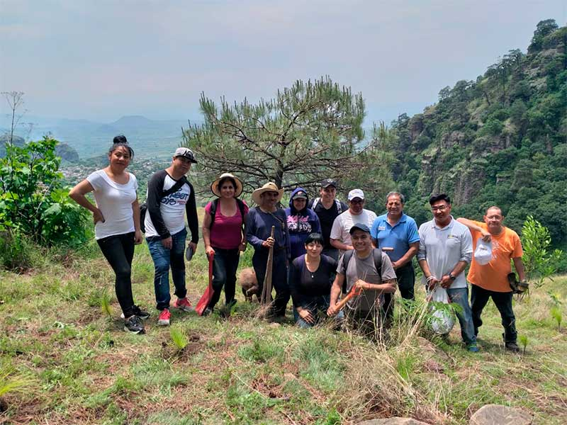 reforestacion-5