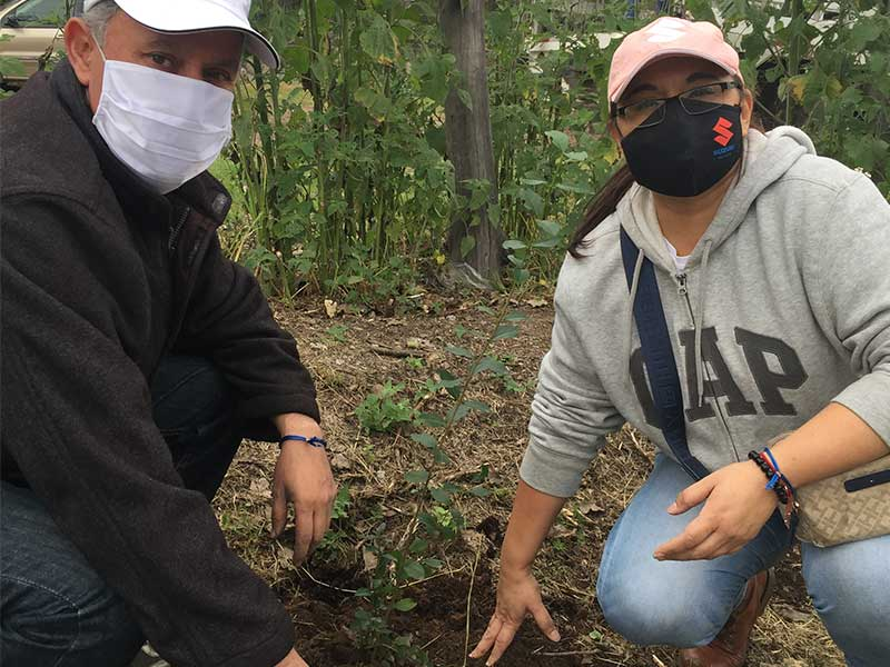 reforestacion-8