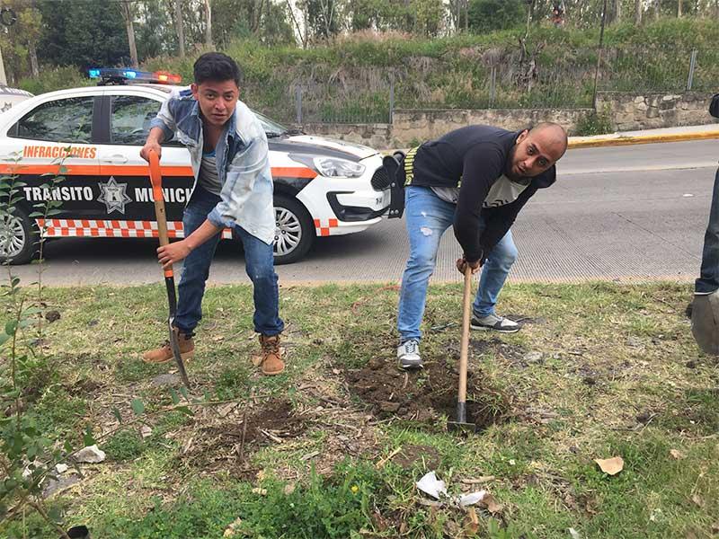 reforestacion-9